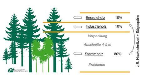 Info-Grafik anteilige Verwendung von Holz